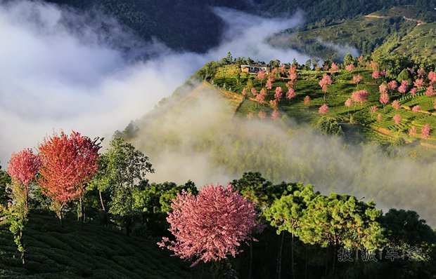 大理无量山樱花谷的门票是多少无量山樱花谷,位于云南大理州南涧县