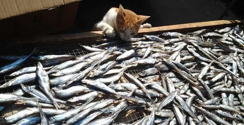 馋猫守鱼 ·【原创】 - kkk20088 - kkk20088的博客
